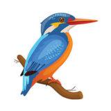 Kingfisher Clipart 3